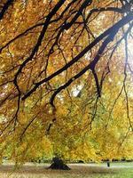 foglie di autunno al parco henrietta