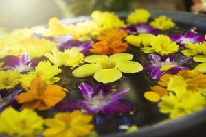 Blumen im Wasser foto