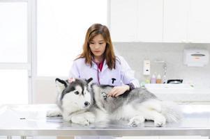 giovane veterinario che esamina il husky siberiano sveglio foto