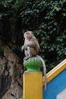 maschio macaco nelle grotte di Batu foto