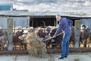 allevatore maschio in una fattoria foto