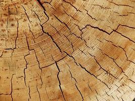 modello in legno foto