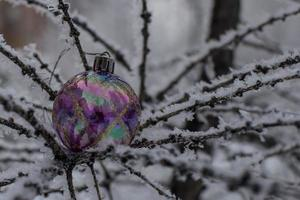 giocattolo dell'albero di Natale su un ramo nevoso foto