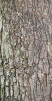 vecchio modello di legno del fondo di struttura dell'albero