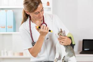 clinica veterinaria con un gattino foto