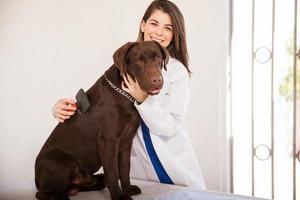 veterinario che spazzola un labrador foto