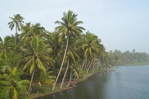 giungla tropicale sul fiume foto