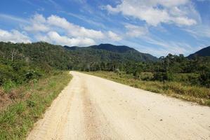 foresta tropicale amazzonica (giungla) in bolivia