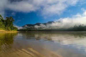 giungla boliviana foto