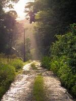 vialetto nella giungla foto