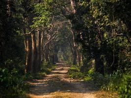 strada della giungla foto