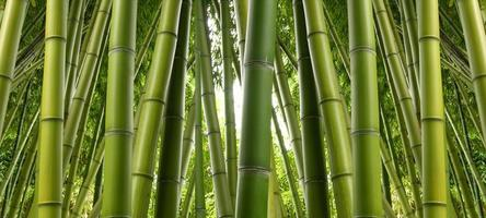 giungla di bambù foto