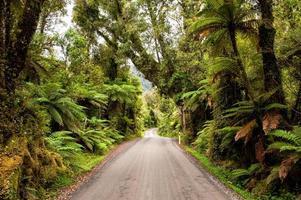 strada della giungla