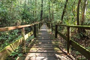 giungla del Borneo