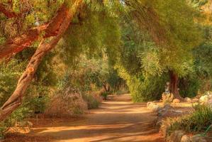 sentiero nella giungla 2 foto