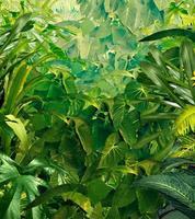 sfondo di giungla tropicale foto