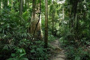 sentiero nella giungla in Tailandia foto