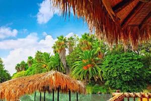 bellissimo paesaggio di umida giungla tropicale. foto
