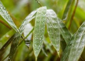foglie nella giungla dopo la pioggia