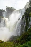 bellissima natura giungla selvaggia paesaggio foresta pluviale iguazu cascate argentina foto