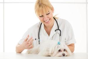dal veterinario foto