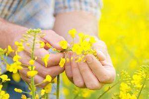 contadino in piedi nel campo agricolo di colza coltivato a semi oleosi