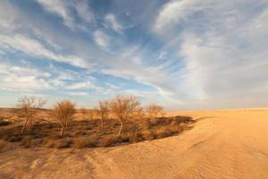 deserto giallo foto