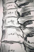 antica illustrazione medica - vertebre | colonna vertebrale foto