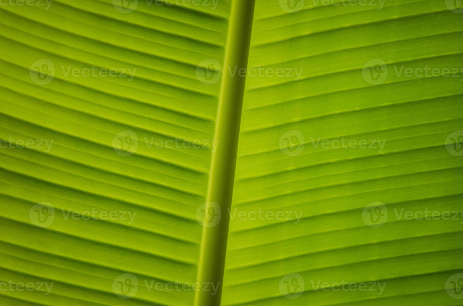 linda folha verde foto
