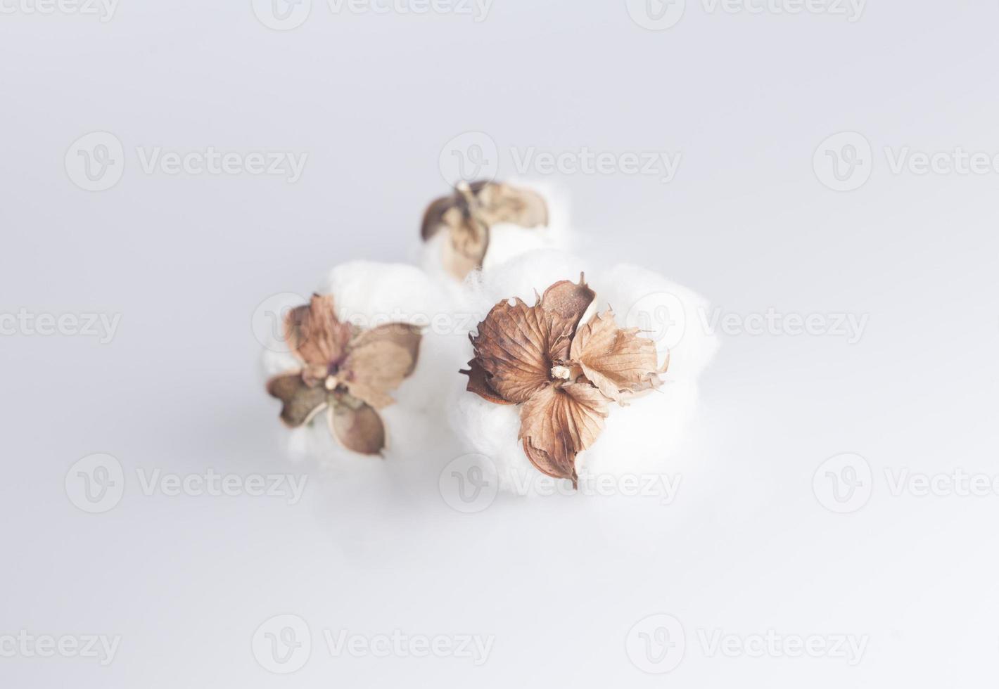 algodão foto