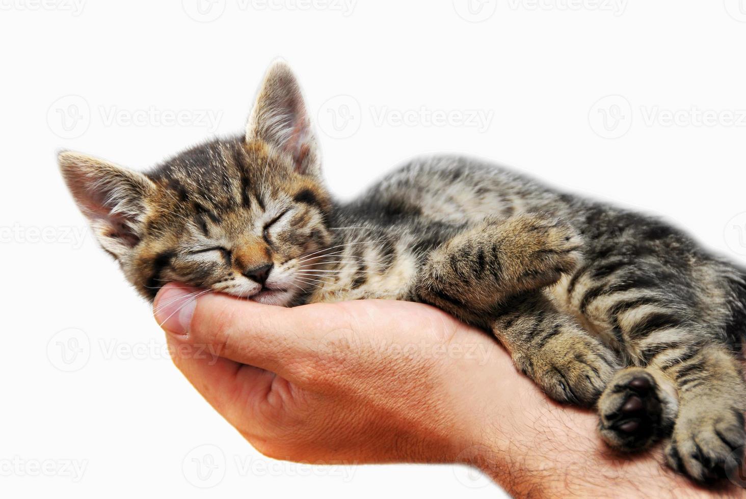 gatinho dormindo na palma da mão foto