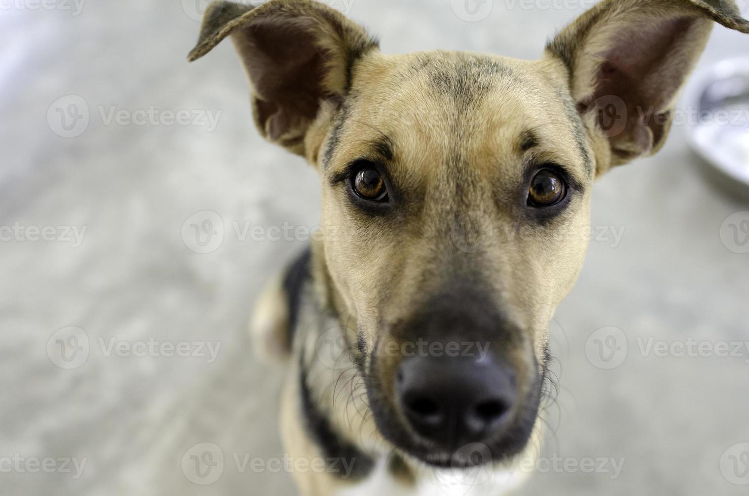 cachorro e tigela foto