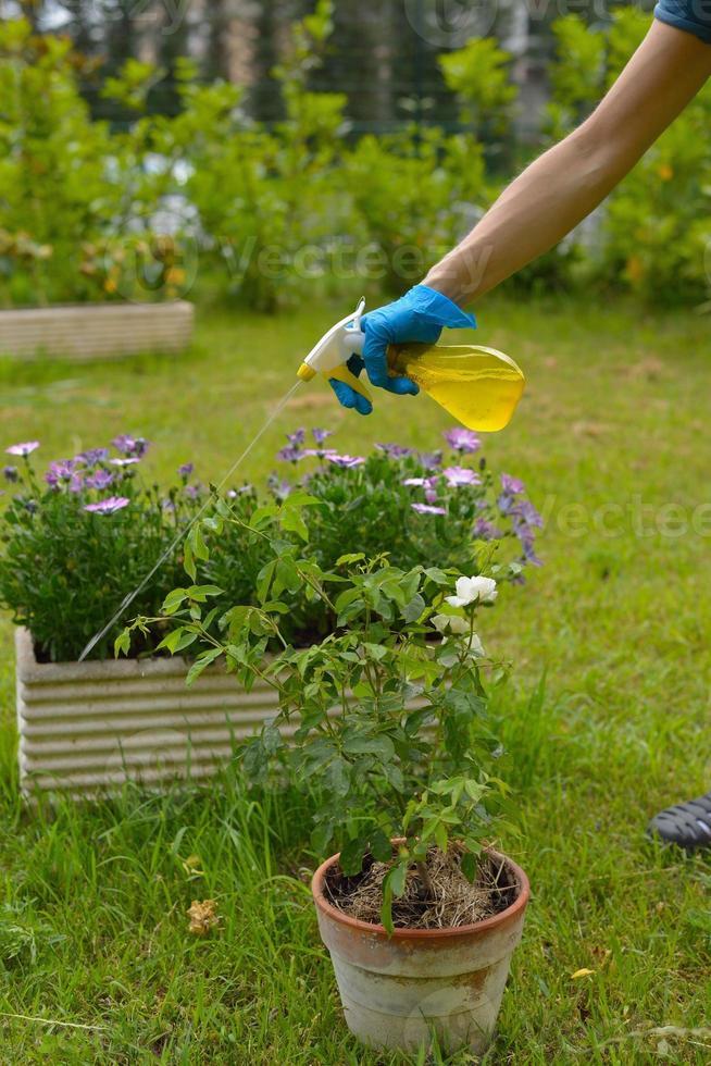 spray de pesticidas foto