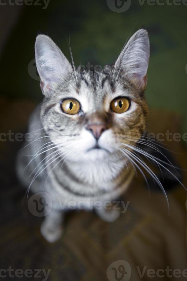 gatos olhando para você foto