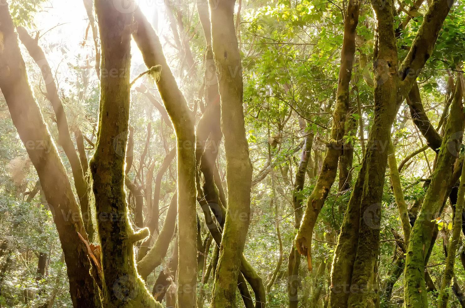 floresta de louro foto