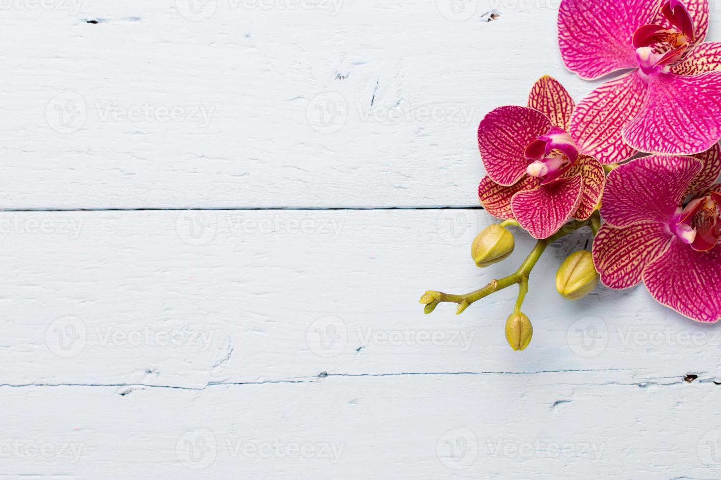 orquídea. foto