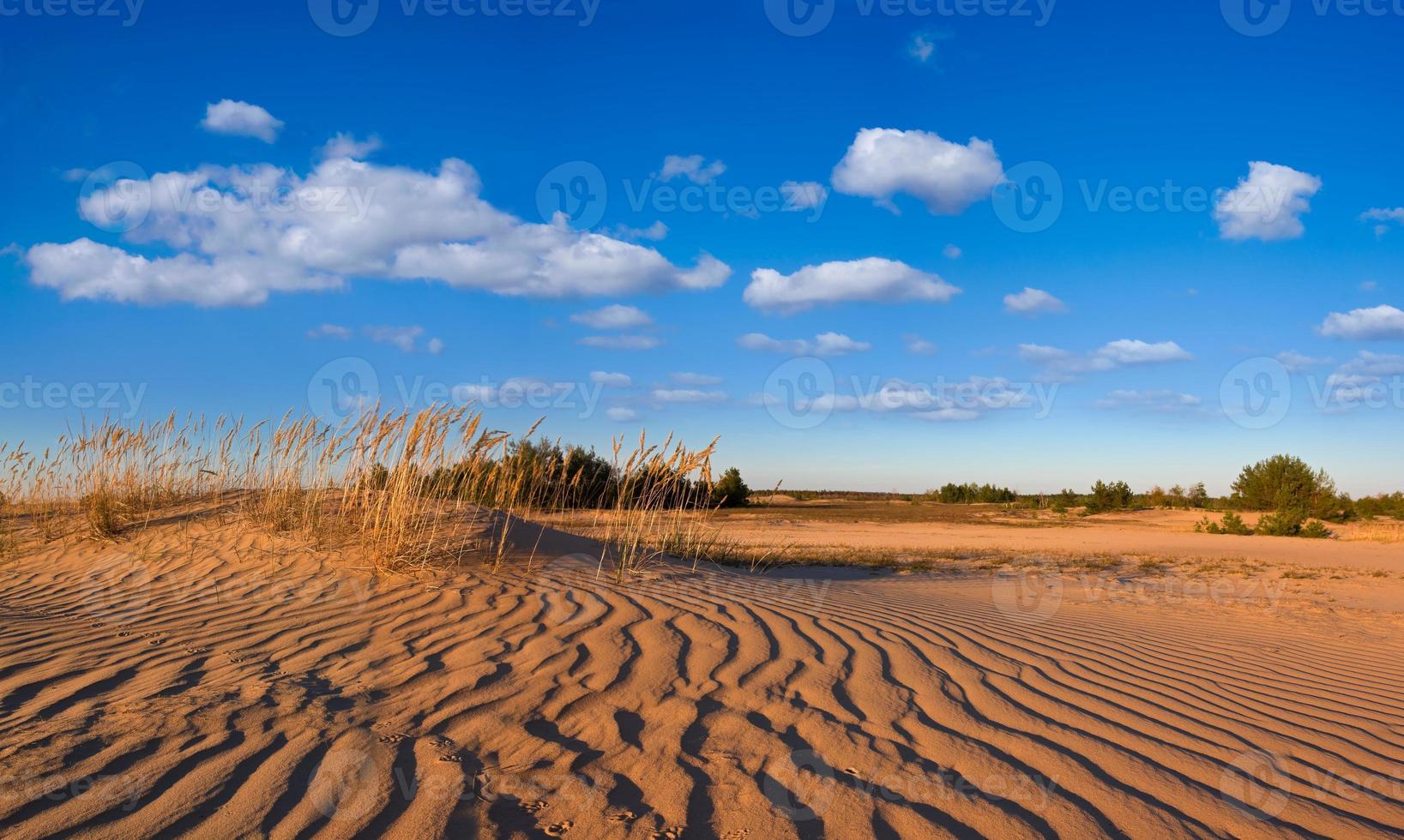 panorama do deserto de areia foto