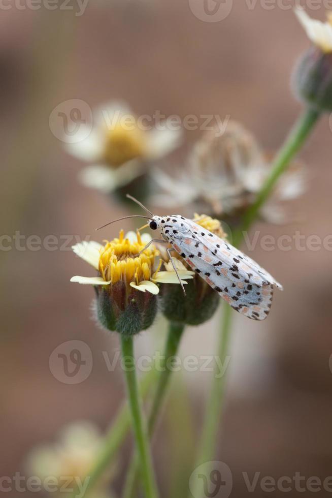 insetos em flores foto