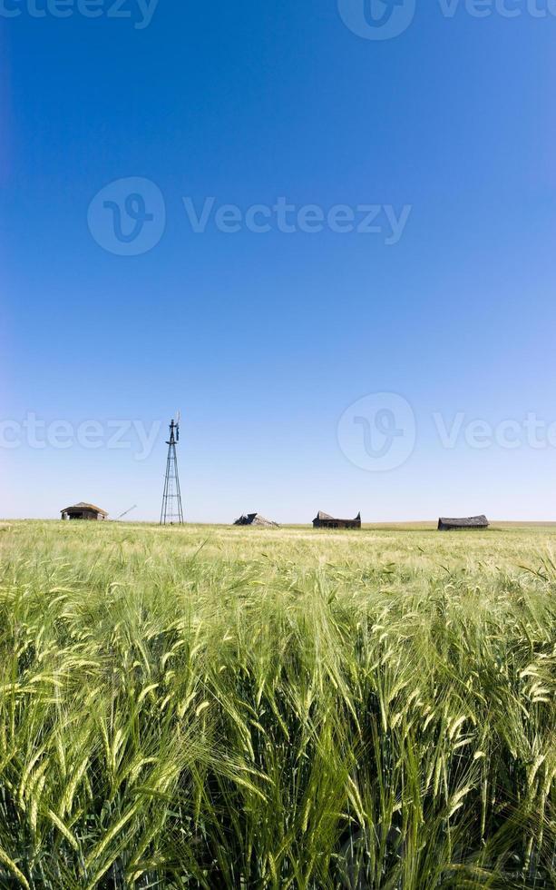 colheita, galpões e moinho de vento foto