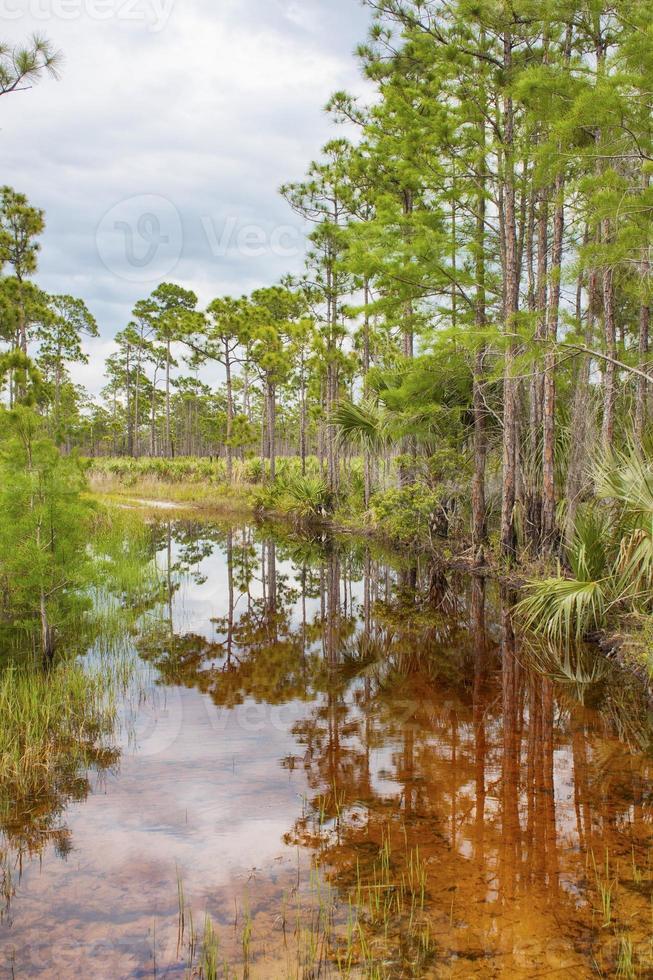 árvores tropicais no pântano dos marismas foto