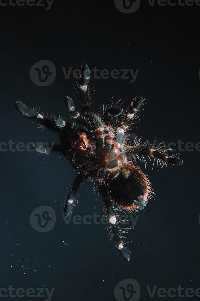 aranha de pássaro foto