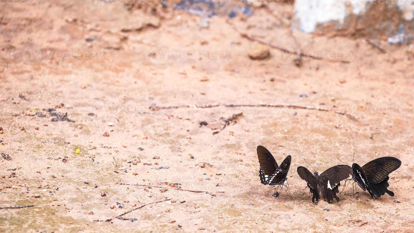 linda borboleta na natureza foto