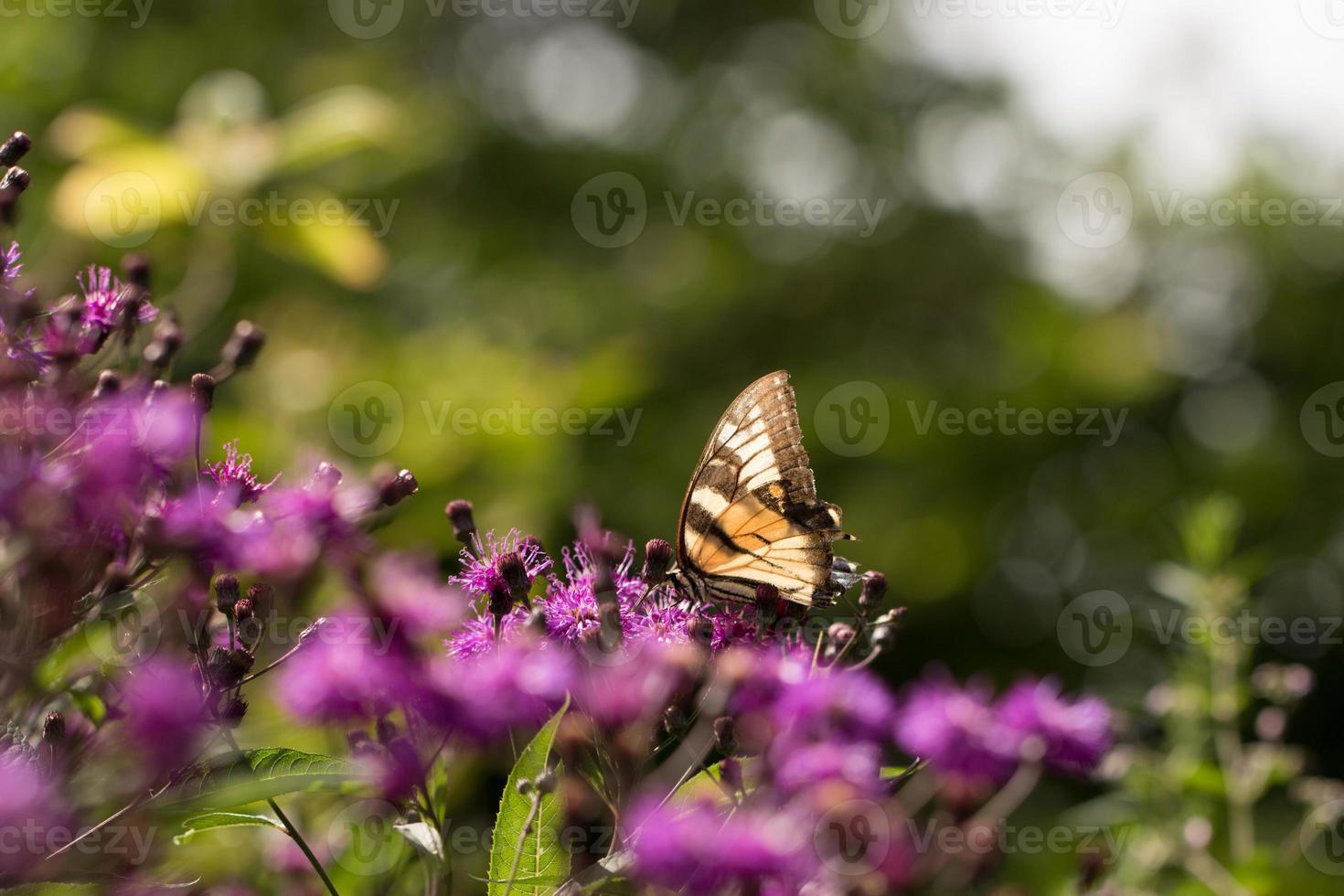 borboleta no cânhamo foto