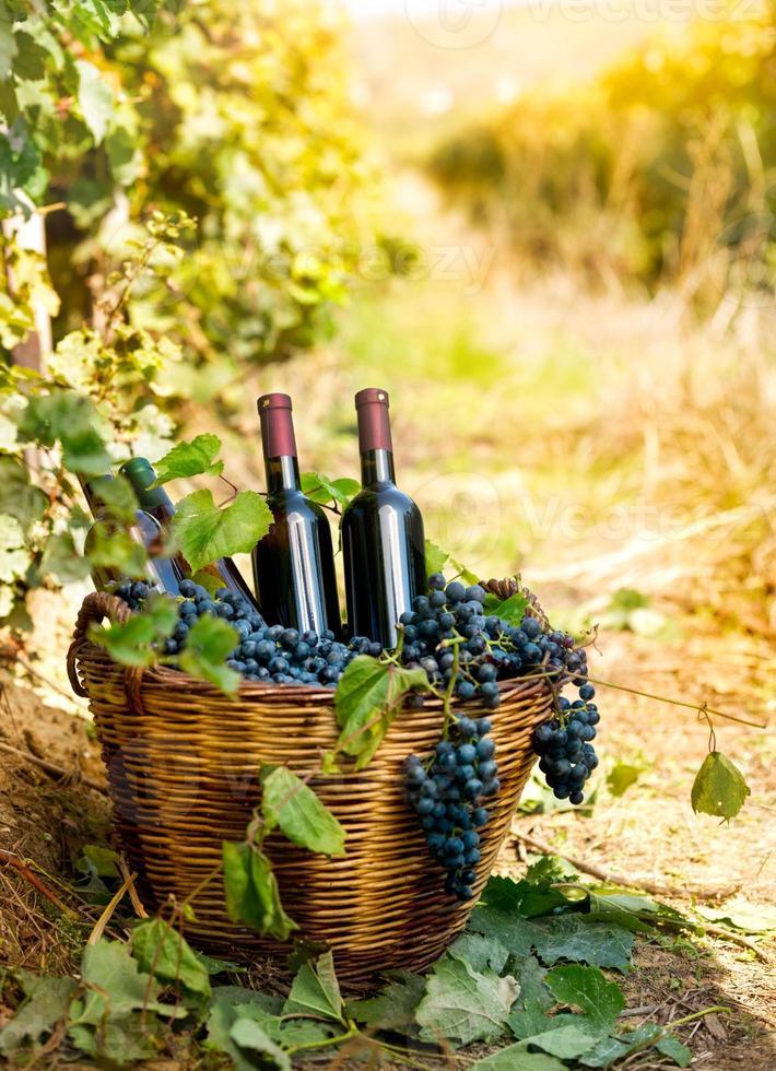 garrafas de vinho tinto e uvas na cesta foto