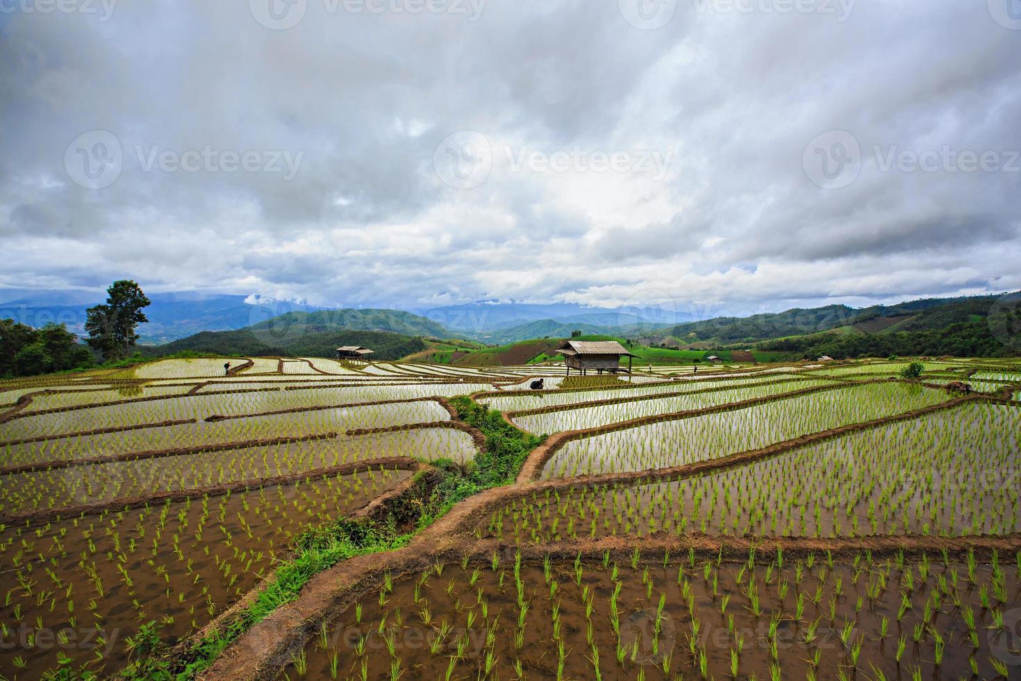 campos de arroz, papongpieng, chiang mai, tailândia. foto