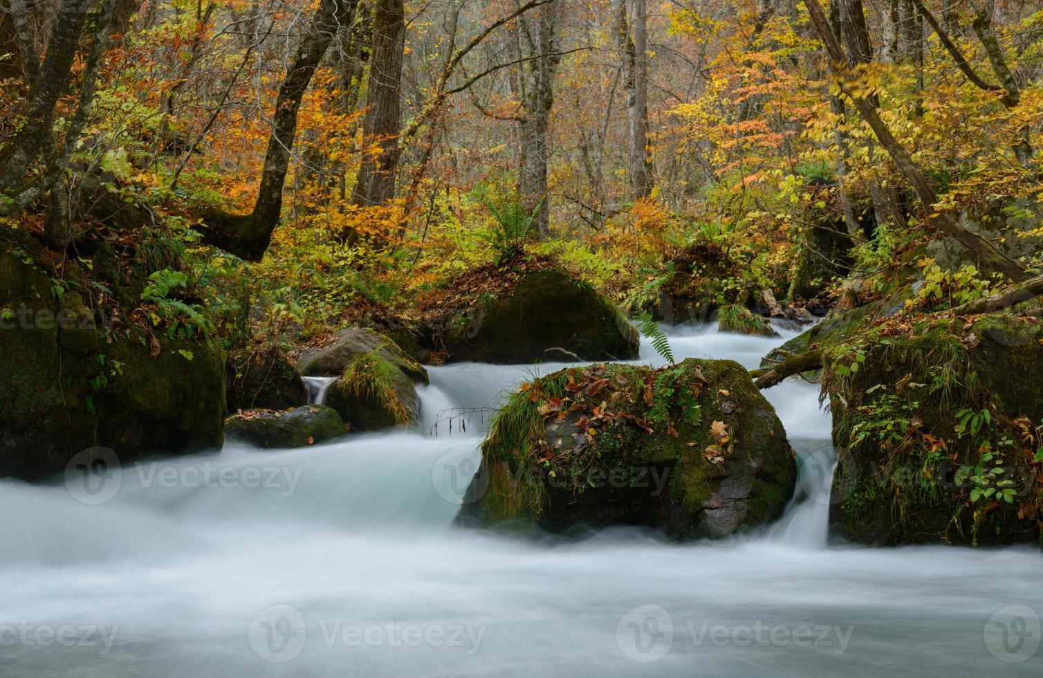 oirase gorge no outono, em aomori, japão foto