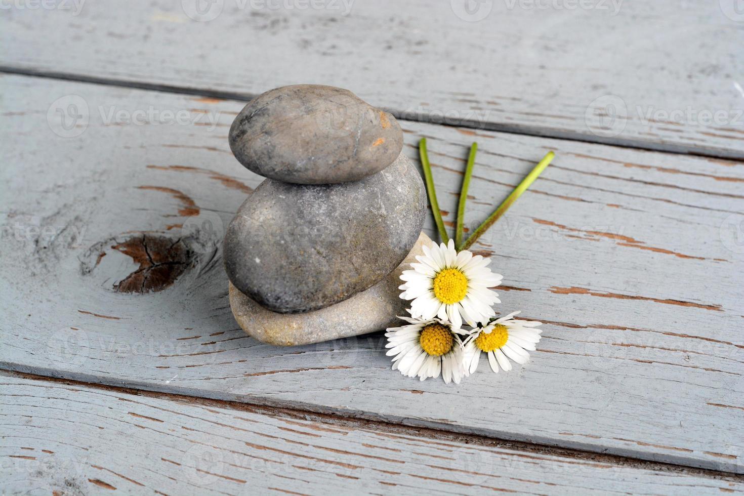 três pedras zen com margaridas em madeira velha foto