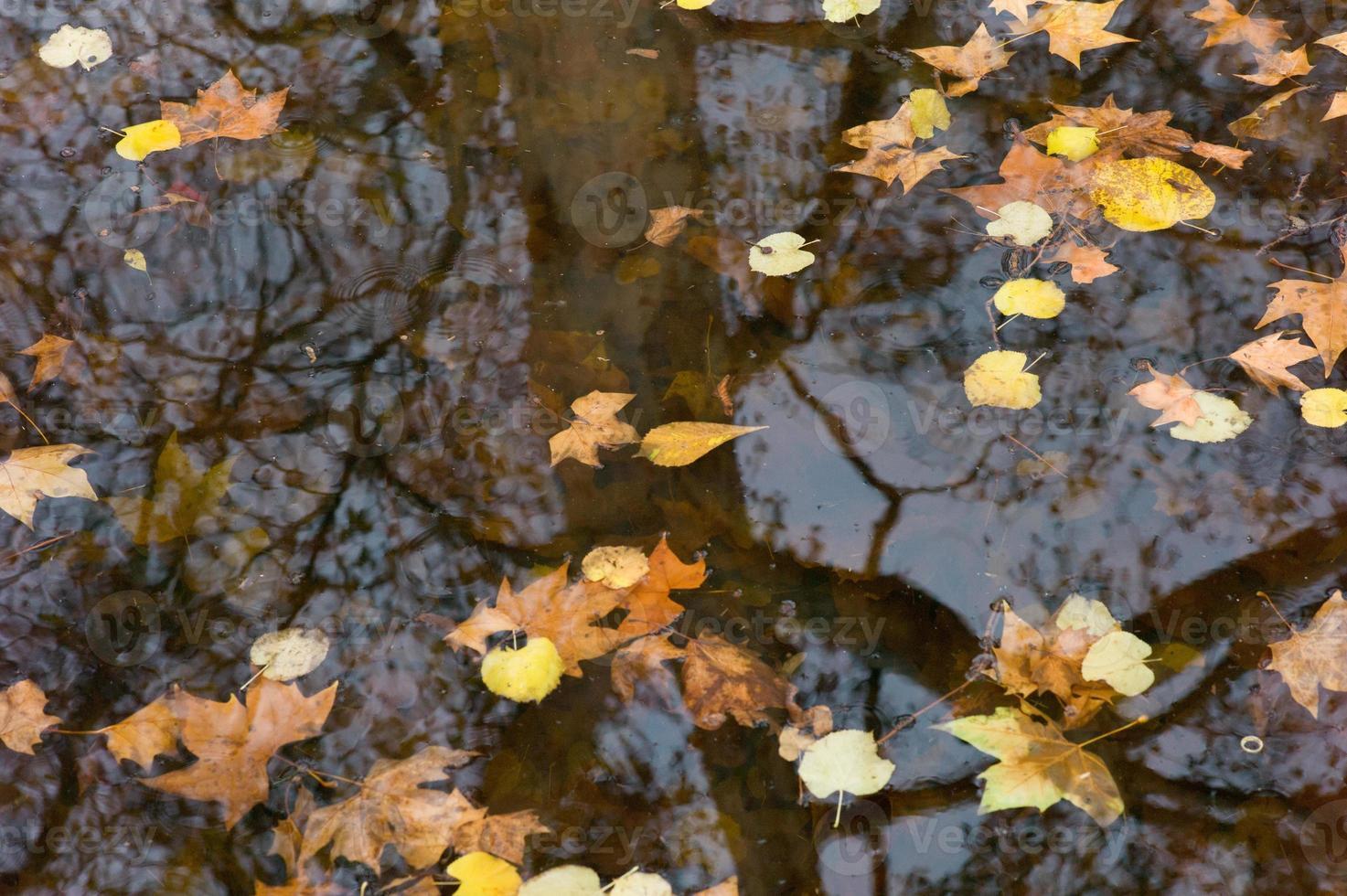 reflexões de outono foto