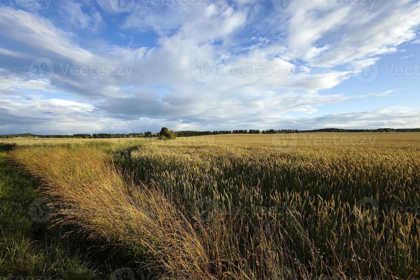 campos agrícolas de fronteira foto