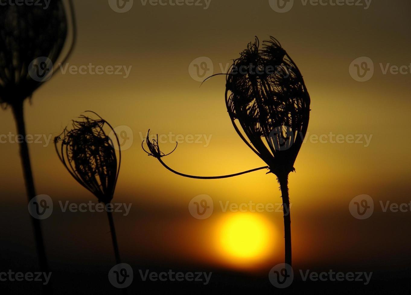 nascer do sol foto